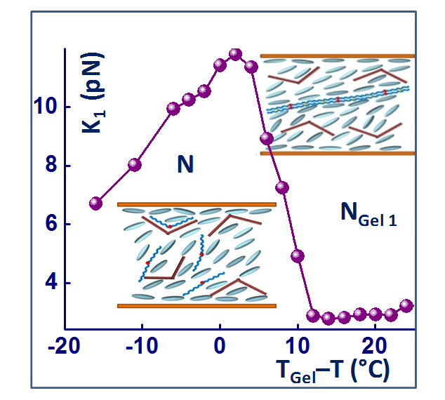 Diminished temperature independent splay elastic constant on gelation